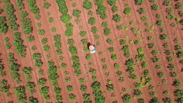 農場のキャッサバで働く農民の空中のトップビュー