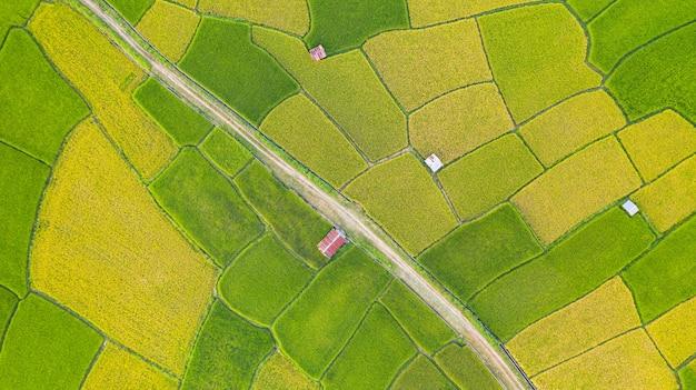 タイ北部の朝の緑と黄色の田んぼの風景の異なるパターンの空撮