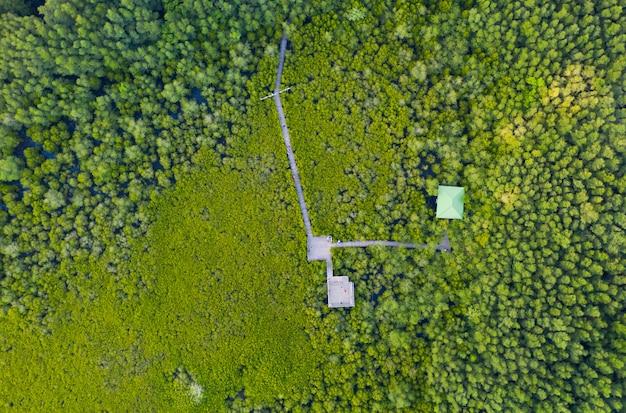 タイのマングローブ林の保全とマングローブ木製の橋の空中のトップビュー