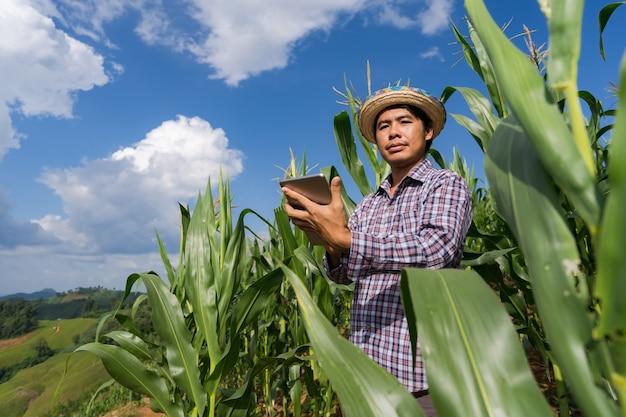 夏の青い空の下のトウモロコシ畑でタブレットを保持している大人の農家