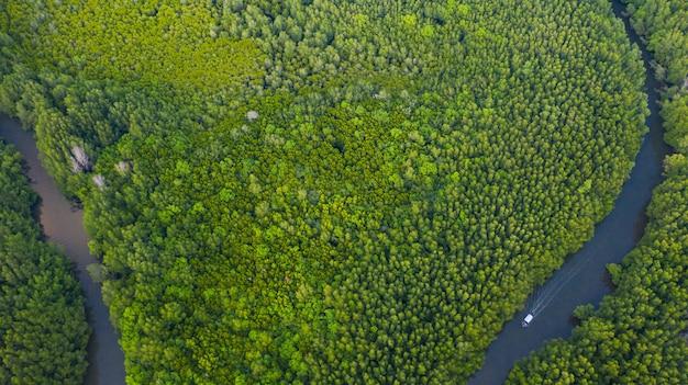 Воздушный взгляд сверху шлюпки на реке в сохранении мангрового леса в таиланде