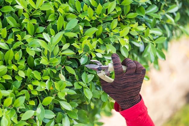 Обрезка декоративных деревьев в домашних условиях утром