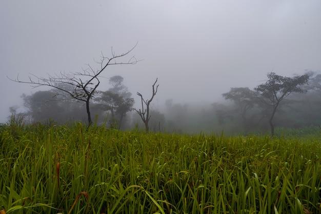 朝、美しい自然の風景に霧の森の木