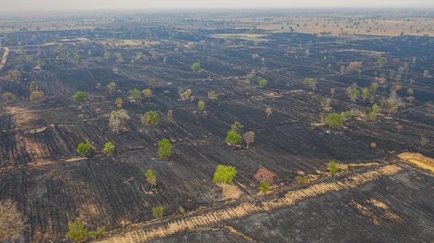 収穫後の田んぼの燃焼の空撮