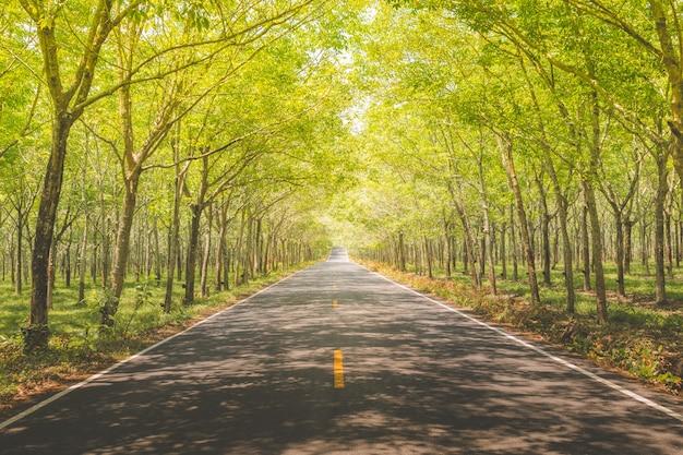 森の美しい道路。