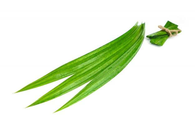 分離された水滴と新鮮な緑のパンダンの葉