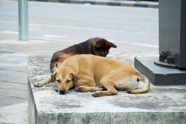 Собака браун спит на полу на обочине дороги