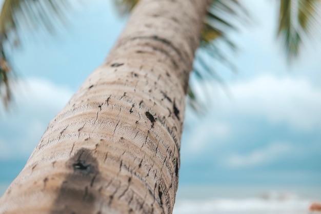 Кокосовая пальма с голубым небом и облаками на море. пастельный или минимальный тон.