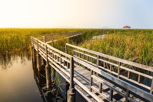 青い空と芝生のフィールドと沼の木造橋歩道の美しい風景