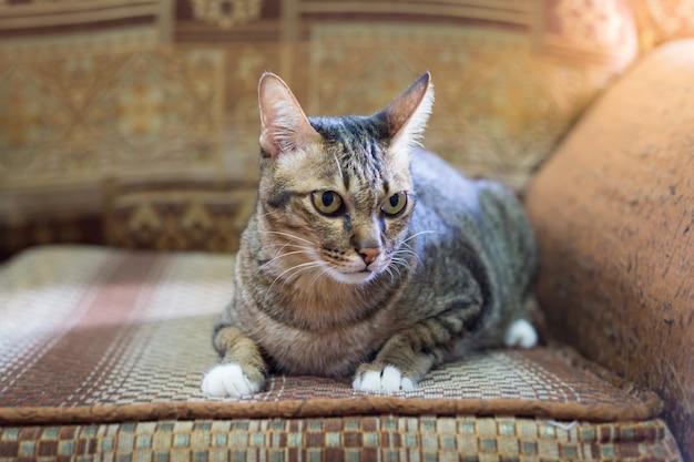 Коричневый глаз кошка на старинный диван в теплый тон. выбрать фокус
