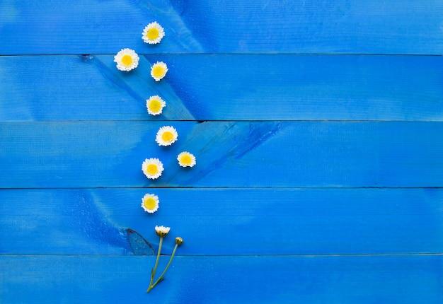 青い木製の背景に菊の花。
