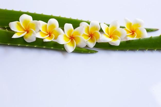 アロエベラとプルメリアの花は白い背景の上。