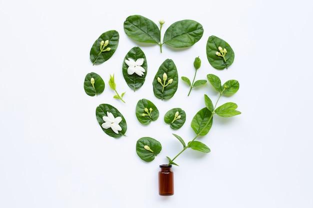 Бутылка эфирного масла с цветком жасмина и листья на белом.