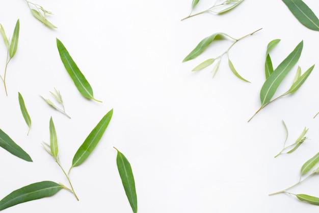 Рамка сделанная из листьев евкалипта на белой предпосылке.