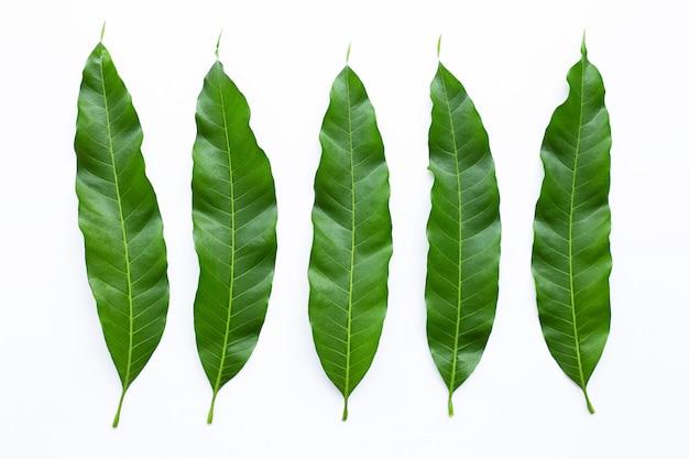 マンゴーは、白い背景の上葉します。