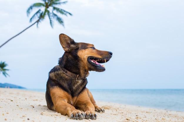 Счастливая собака на пляже.