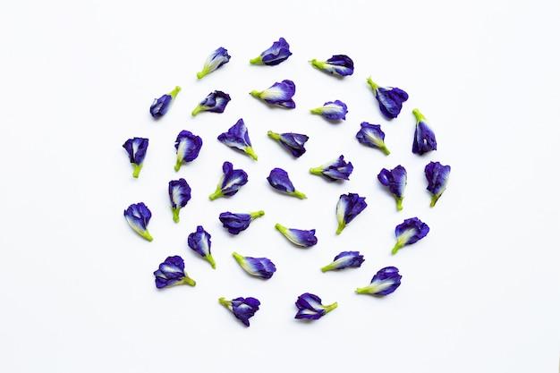 白の蝶のエンドウ豆の花