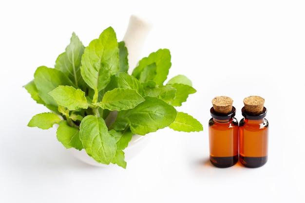 Эфирное масло со святыми листьями базилика в фарфоровой ступке на белом