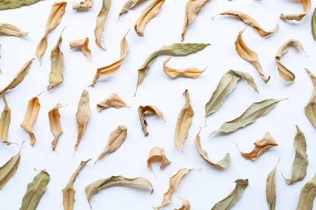白ユーカリ乾燥葉。