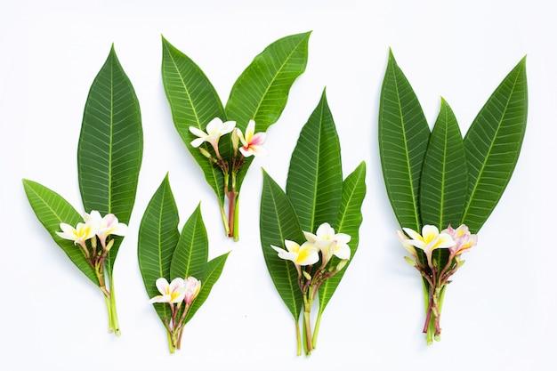 白い背景の上の葉を持つプルメリアの花。