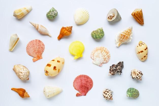 Композиция из экзотических морских раковин на белом