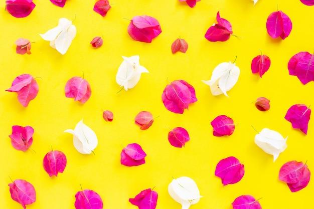 黄色の背景に美しい赤と白のブーゲンビリアの花。