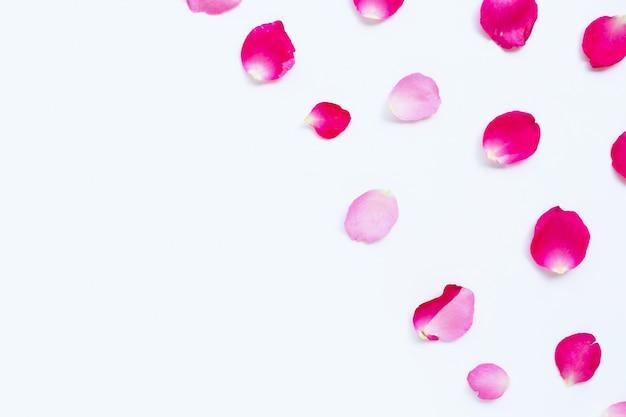 白で隔離されるバラの花びら。