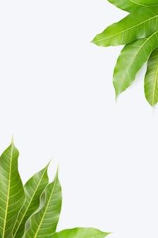 白い背景の上のマンゴーの葉で作られたフレーム