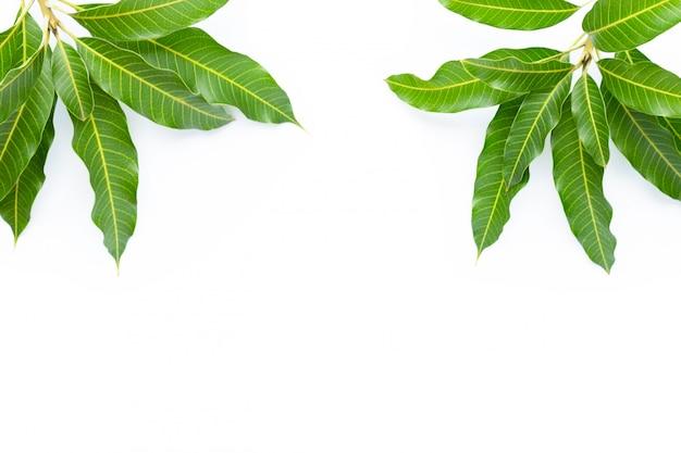 マンゴーで作られたフレームは、白い背景に残します。