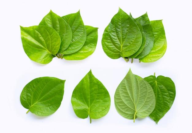 白地に緑のキンマの葉