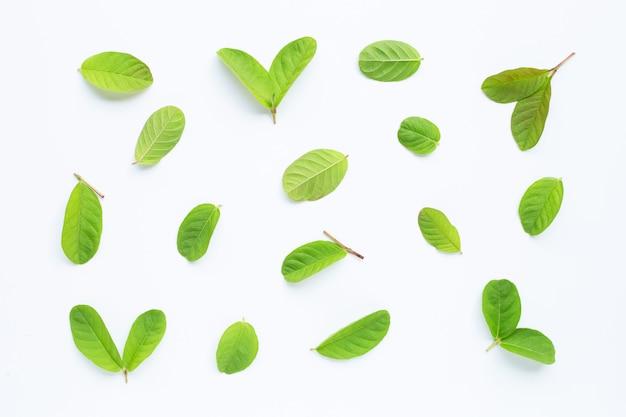 Гуава листья на белом фоне.