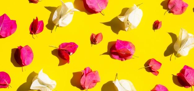 Красивый красный и белый цветок бугинвилии на желтом фоне.