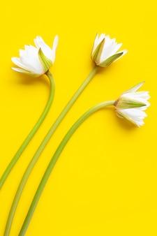 黄色の白い表面に咲く蓮の花