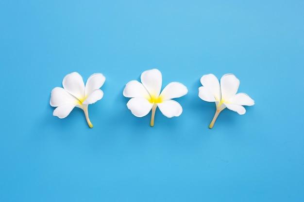 青色の背景にプルメリアやプルメリアの花。