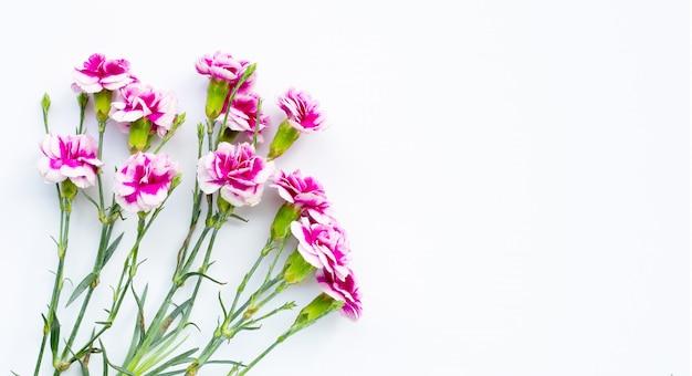 白い背景の上のカーネーションの花。