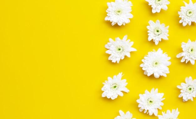 Белая хризантема на желтом фоне.