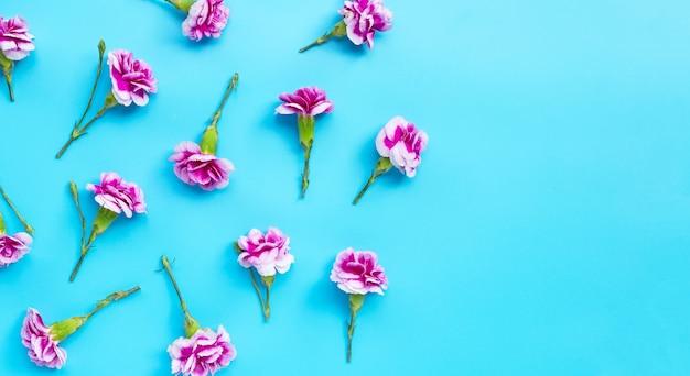 青色の背景にカーネーションの花。