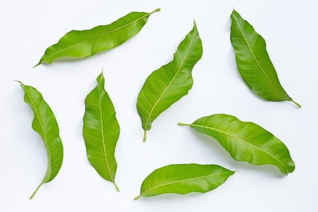 マンゴーは白い背景の上の葉。