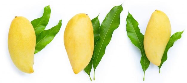 Манго с листьями на белом фоне.