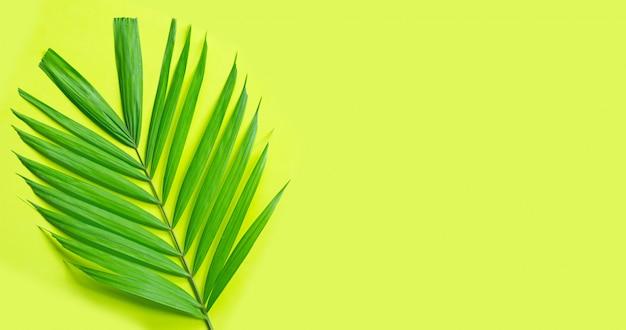 緑の背景に熱帯のヤシを葉します。夏の休日のコンセプトをお楽しみください。