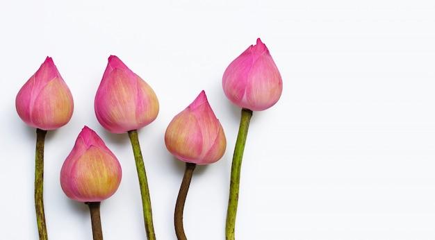 白地にピンクの蓮の花。