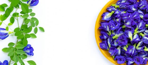新鮮な蝶のエンドウ豆の花または白い背景の青いエンドウ豆。コピースペース