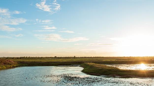 タイの湿地帯のパノラマの美しい夕日。
