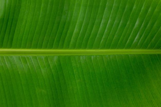 Фон зеленый характер банановых листьев, концепция охраны природы