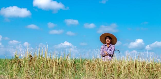 農家は水田で作物を収穫しています。明るい空の日