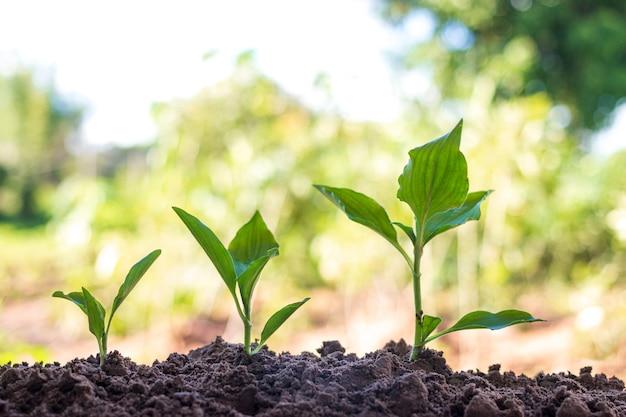 写真は木の成長、成長の概念を示しています。
