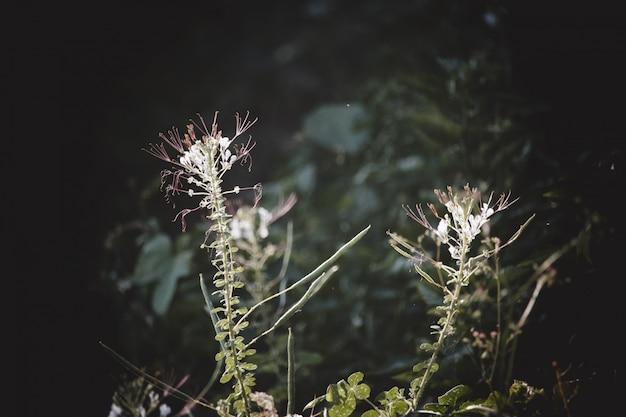 朝の日光の背景の花