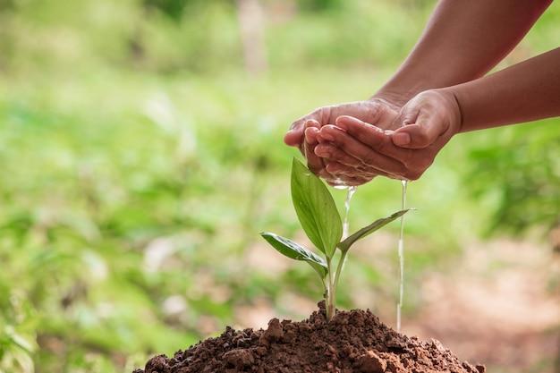 女性手の庭の植物に水をまく