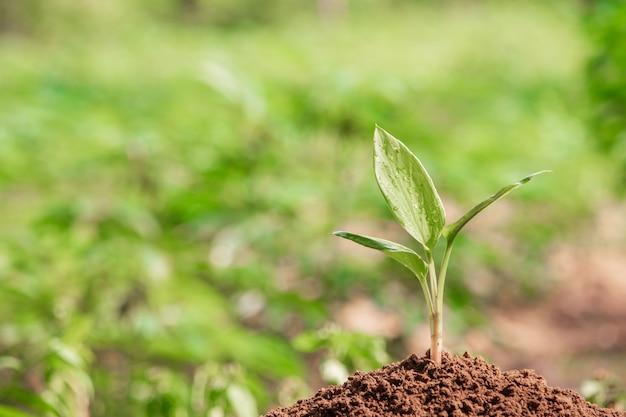 朝の光で自然に若い植物