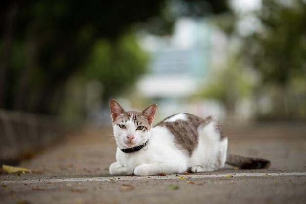 猫が庭に座っています。彼はとてもかわいいです。彼は少し虎のように見えます。人気のペットです。